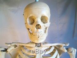 Grandeur Nature Modèle Anatomique Squelette Humain 5'7 Enseignement Médical Étudiant En Médecine Dentaire